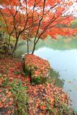 רילוקיישן ליפן: מה שצריך לדעת על חוקי השכירות במקום - אושן רילוקיישן